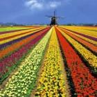 10 lugares del mundo que visitar en primavera