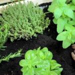 Material 8 - Plantas