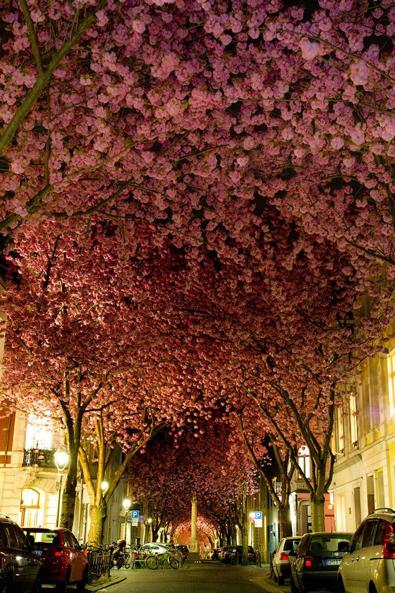 Túnel Cherry Blossom Alemania