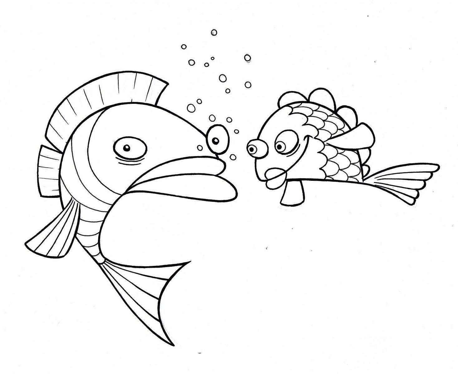 peces bonitos para pitnar  rincon util