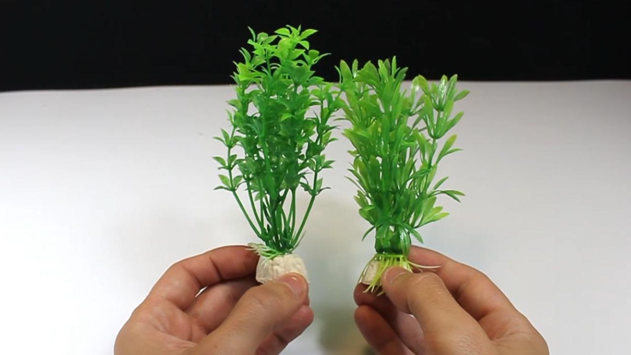 15 plantas acuaticas para estanque